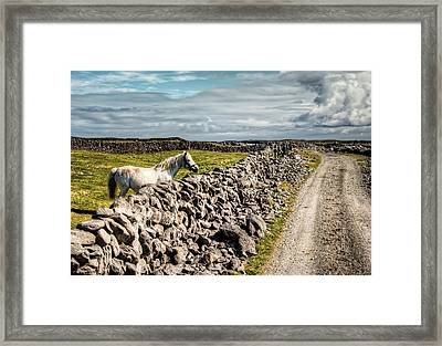 An Aran Horse Framed Print by Natasha Bishop