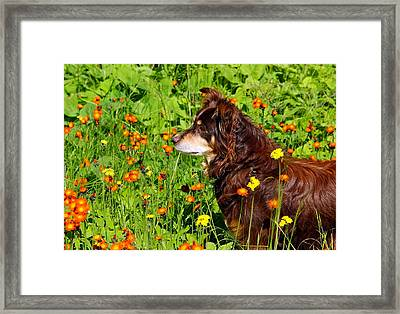 An Aussie's Thoughtful Moment Framed Print by Debbie Oppermann