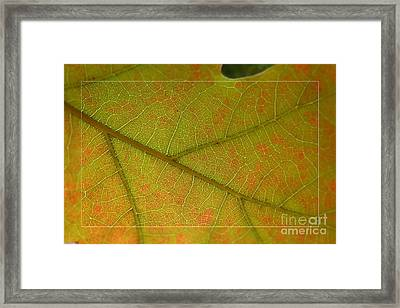 Framed Print featuring the photograph An Autumn Leaf by Jean Bernard Roussilhe