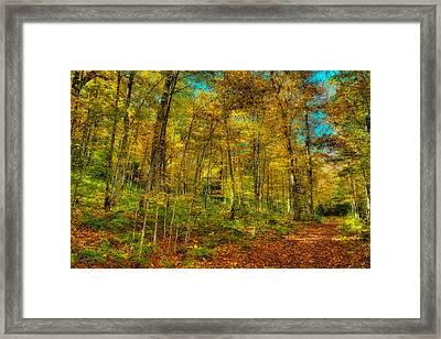 An Autumn Walk Framed Print by David Patterson