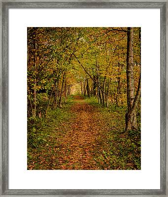An Autumn's Walk Framed Print