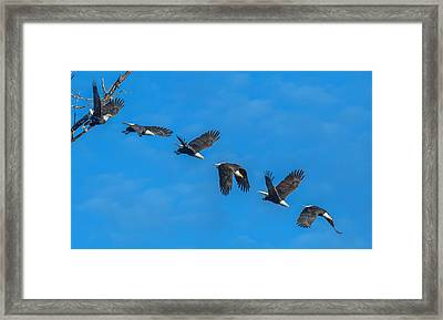 An Eagle Flight Path Framed Print by Angie Vogel