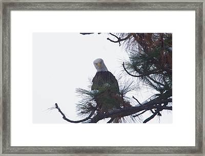 An Eagle Looks Down Framed Print by Jeff Swan