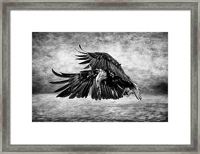 An Eagles Quest Framed Print by Wes and Dotty Weber
