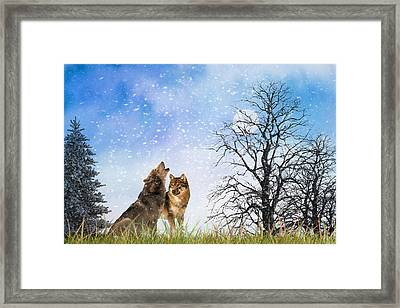 Framed Print featuring the photograph An Early Winter Howl by Diane Schuster