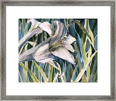 An Easter Lily Framed Print by Mindy Newman
