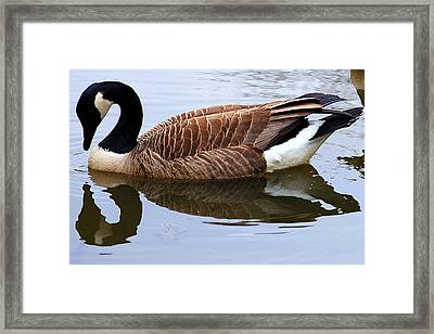An Elegant Pose Framed Print by Frozen in Time Fine Art Photography