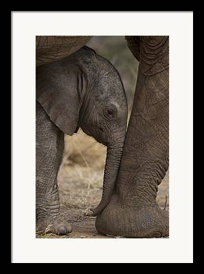 Protection Photographs Framed Prints