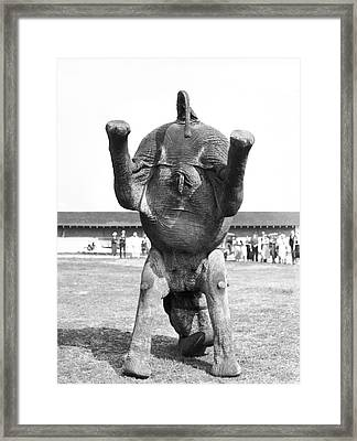 An Elephant Headstand Framed Print by Underwood Archives