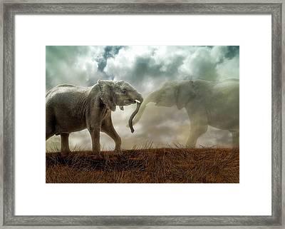 An Elephant Never Forgets Framed Print