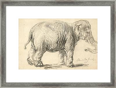 An Elephant Framed Print by Rembrandt