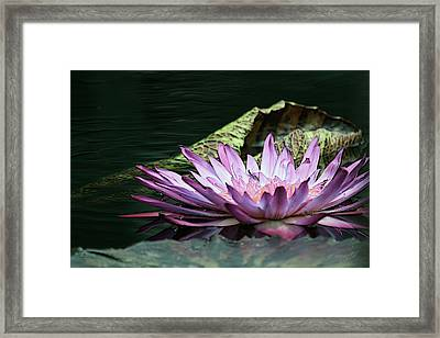 An Evening Glow Framed Print by Yvonne Wright