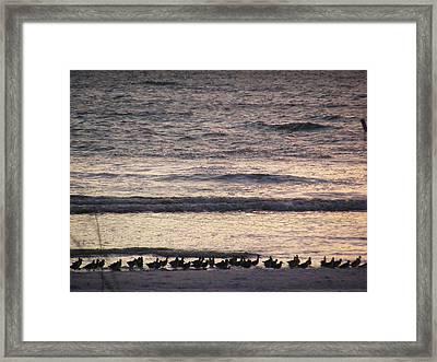 An Evening Stroll Framed Print