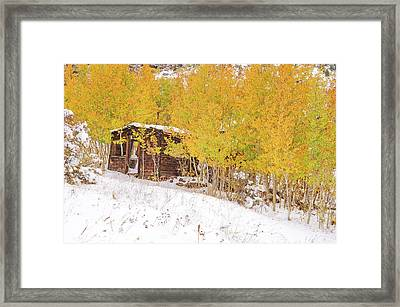An Example Of Etiolated Nostalgia  Framed Print