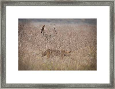 An Eye On The Competition Framed Print by Carl Jackson