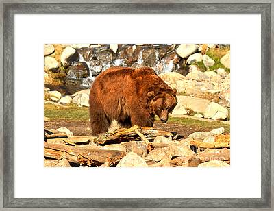 An Eye Out For Food Framed Print by Adam Jewell