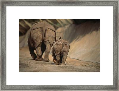 An Indian Rhinoceros And Her Baby Framed Print by Michael Nichols