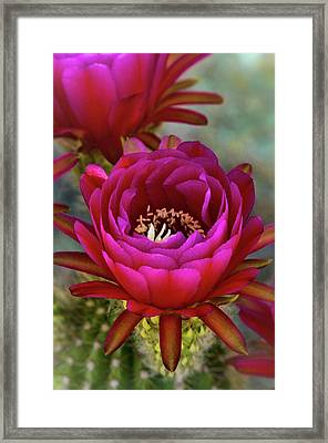 Framed Print featuring the photograph An Inner Beauty by Saija Lehtonen