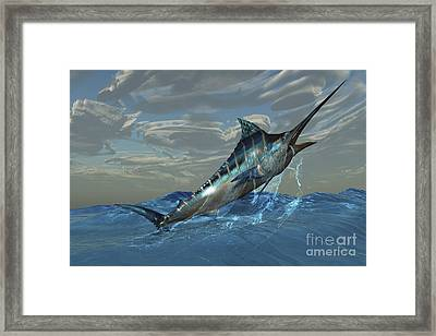 An Iridescent Blue Marlin Bursts Framed Print by Corey Ford