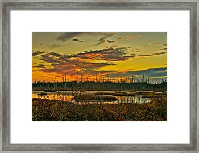 An November Sunset In The Pines Framed Print