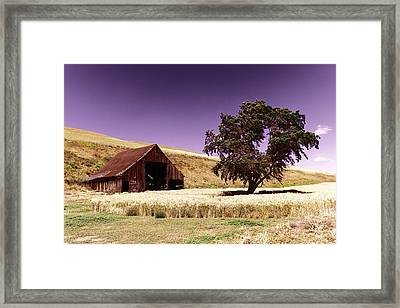 An Old Barn And A Tree Framed Print