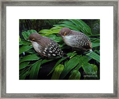 An Old Couple These Two Birds Framed Print