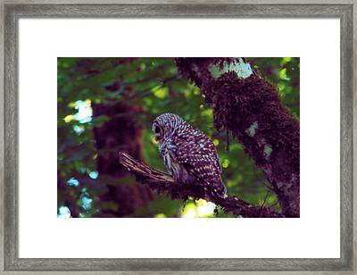 An Owl In The Forest Framed Print by Jeff Swan