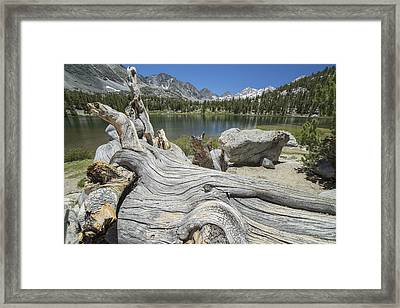 An Old Tree Trunk Lays On The Shores Framed Print by Robert Postma