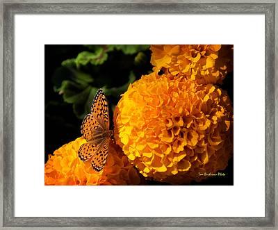 An Orange Landing Strip Framed Print