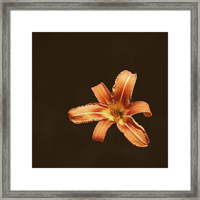 An Orange Lily Framed Print by Scott Norris