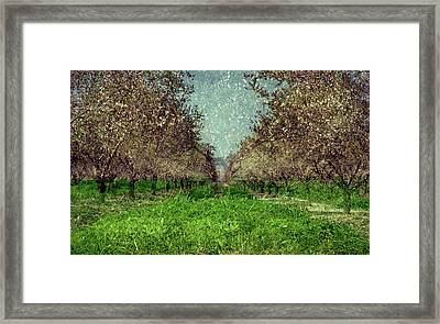 An Orchard In Blossom In The Eila Valley Framed Print