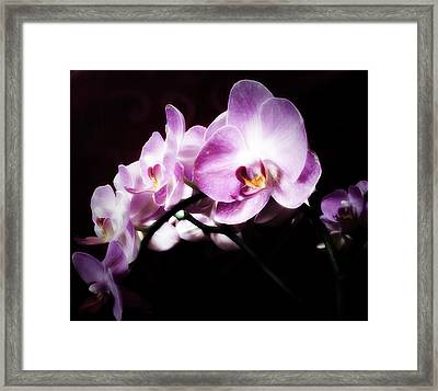 An Orchid For You Framed Print