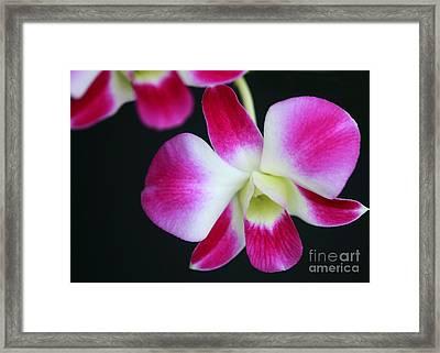 An Orchid Framed Print by Sabrina L Ryan