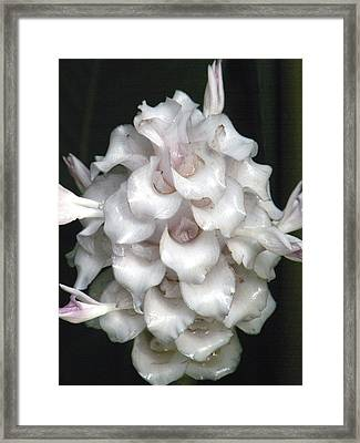 An Unusual Orchid Framed Print