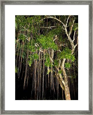 Framed Print featuring the photograph An Unusual Tree by Rosalie Scanlon