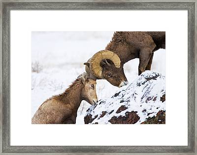 An Uphill Battle Framed Print by Mike  Dawson