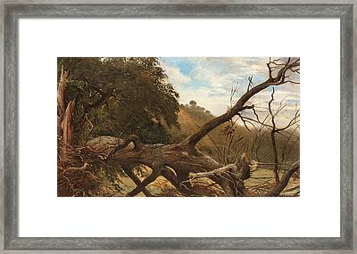 An Uprooted Tree Framed Print