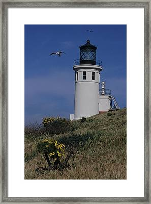 Anacapa Lighthouse And Western Gulls Framed Print by Don Kreuter
