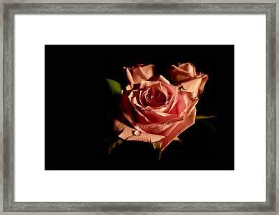 Anastasia's Rose Framed Print by Susan Duda