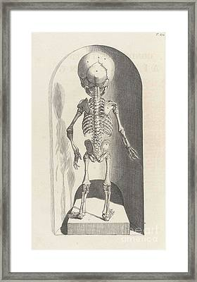 Anatomia Humani Corporis, Table 102 Framed Print by Science Source