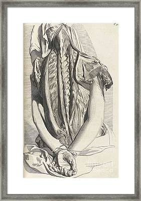 Anatomia Humani Corporis, Table 30, 1690 Framed Print by Science Source