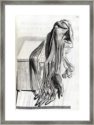Anatomia Humani Corporis, Table 67, 1690 Framed Print by Science Source