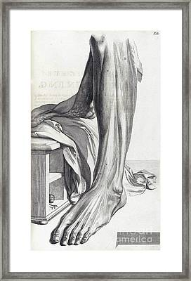 Anatomia Humani Corporis, Table 80, 1690 Framed Print by Science Source
