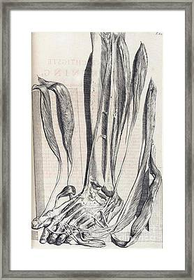 Anatomia Humani Corporis, Table 82, 1690 Framed Print by Science Source