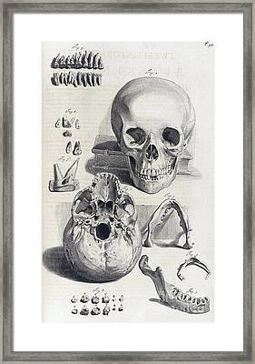 Anatomia Humani Corporis, Table 92, 1690 Framed Print by Science Source