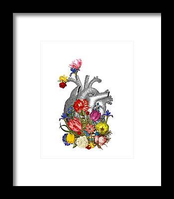 Anatomical Framed Prints