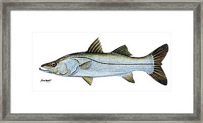 Anatomical Snook Framed Print by Kevin Brant