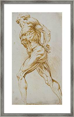 Anatomical Study Framed Print by Rubens