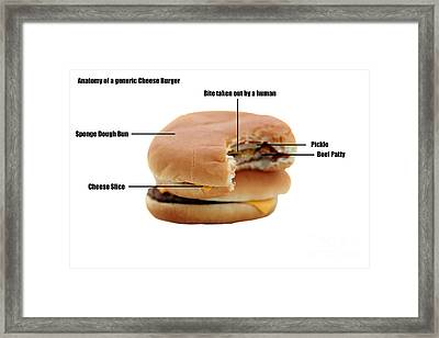 Anatomy Of A Generic Cheese Burger Framed Print by Michael Ledray