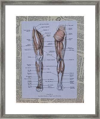 Anatomy Of Art Muscles Of The Leg Framed Print